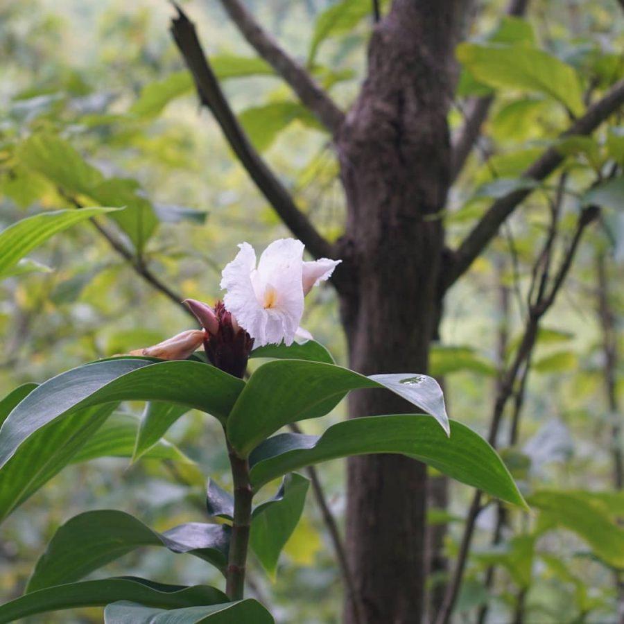 Jaga Hutan untuk Masa Depan, Sayangi Bumi Agar Tetap Asri