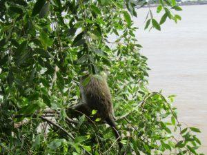 Menyelamatkan Mangrove, Menyelamatkan Masa Depan Dunia